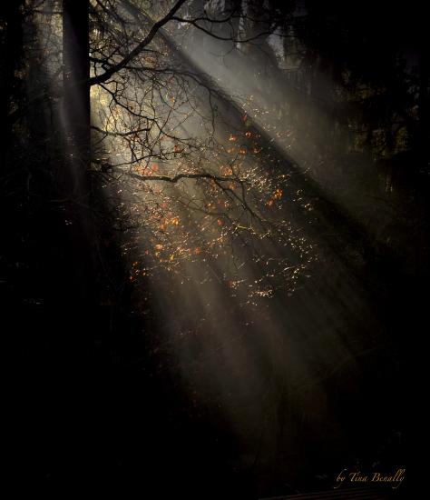 lichtzauber